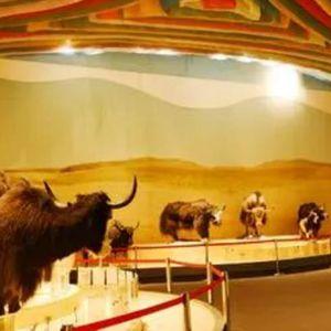 走进博物馆,感受牦牛与西藏的特殊关系